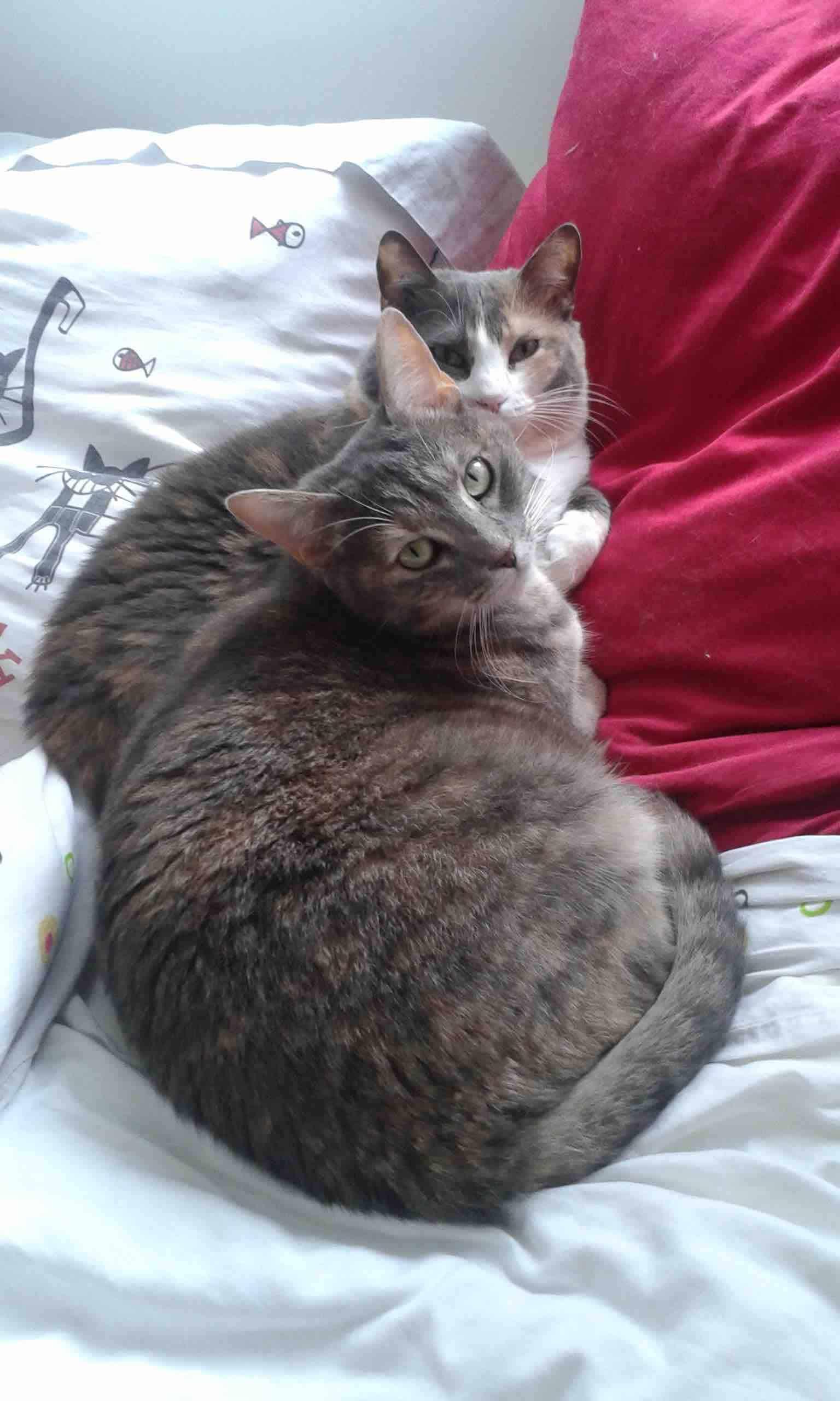 cohabitation chat chat le mans