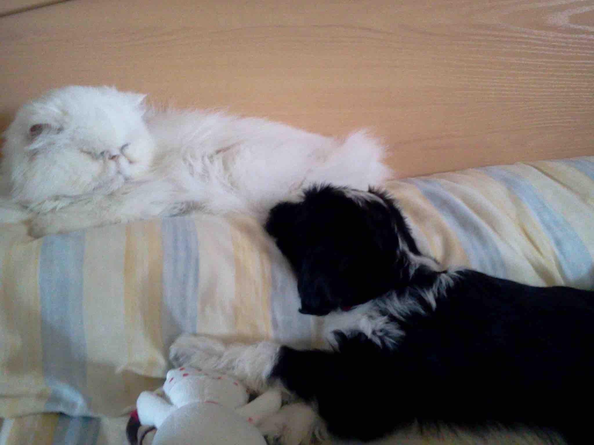 cohabitation-chien-chat-72