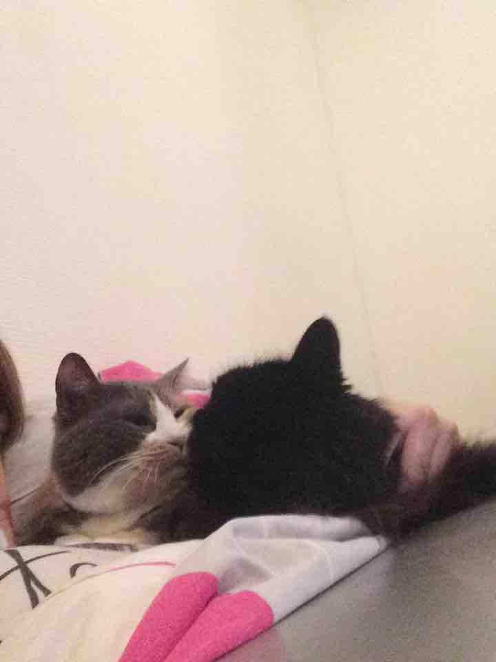 comportementaliste cohabitation chat chat