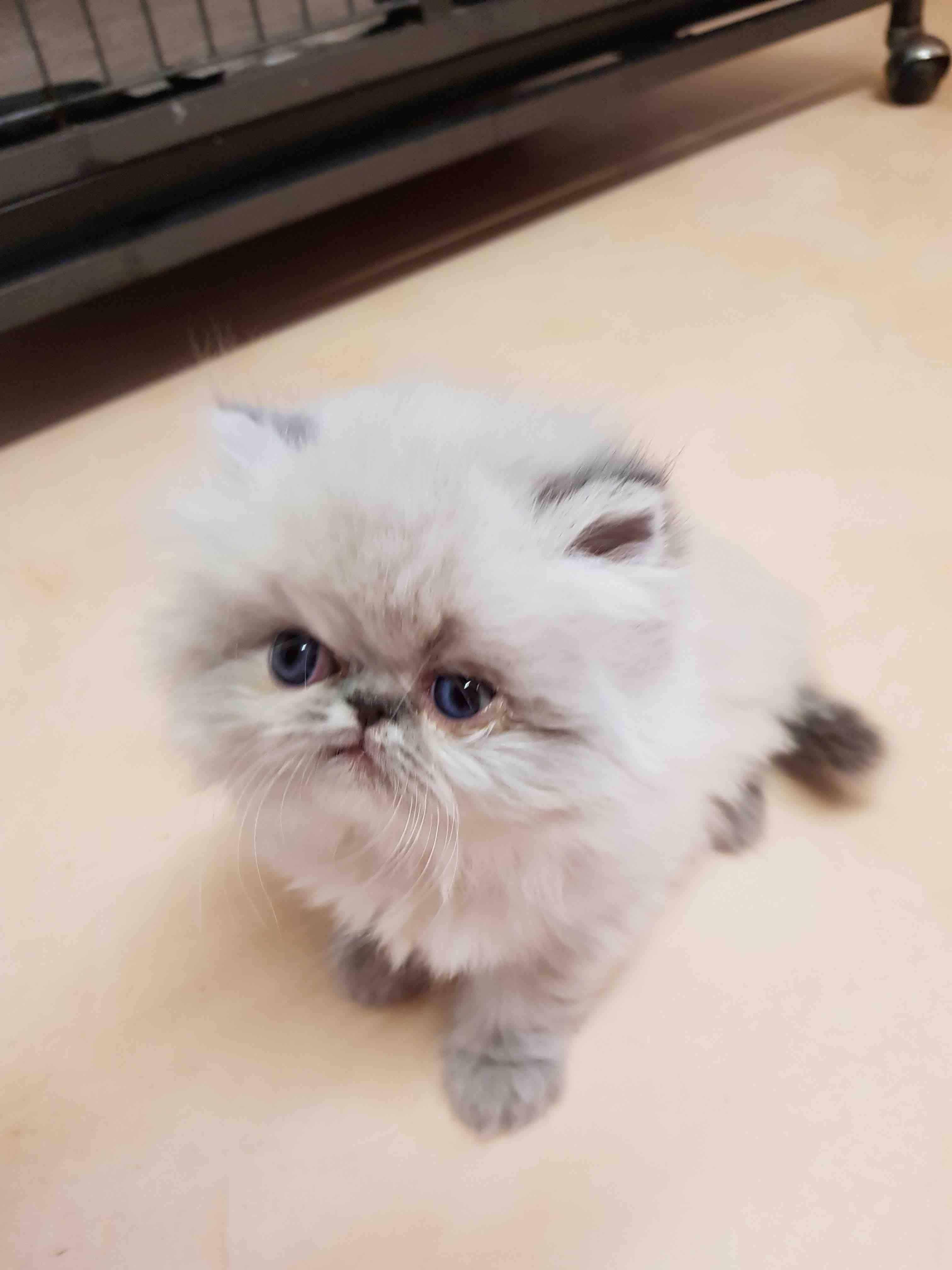 specialiste-comportement-du-chat-roi-le-mans