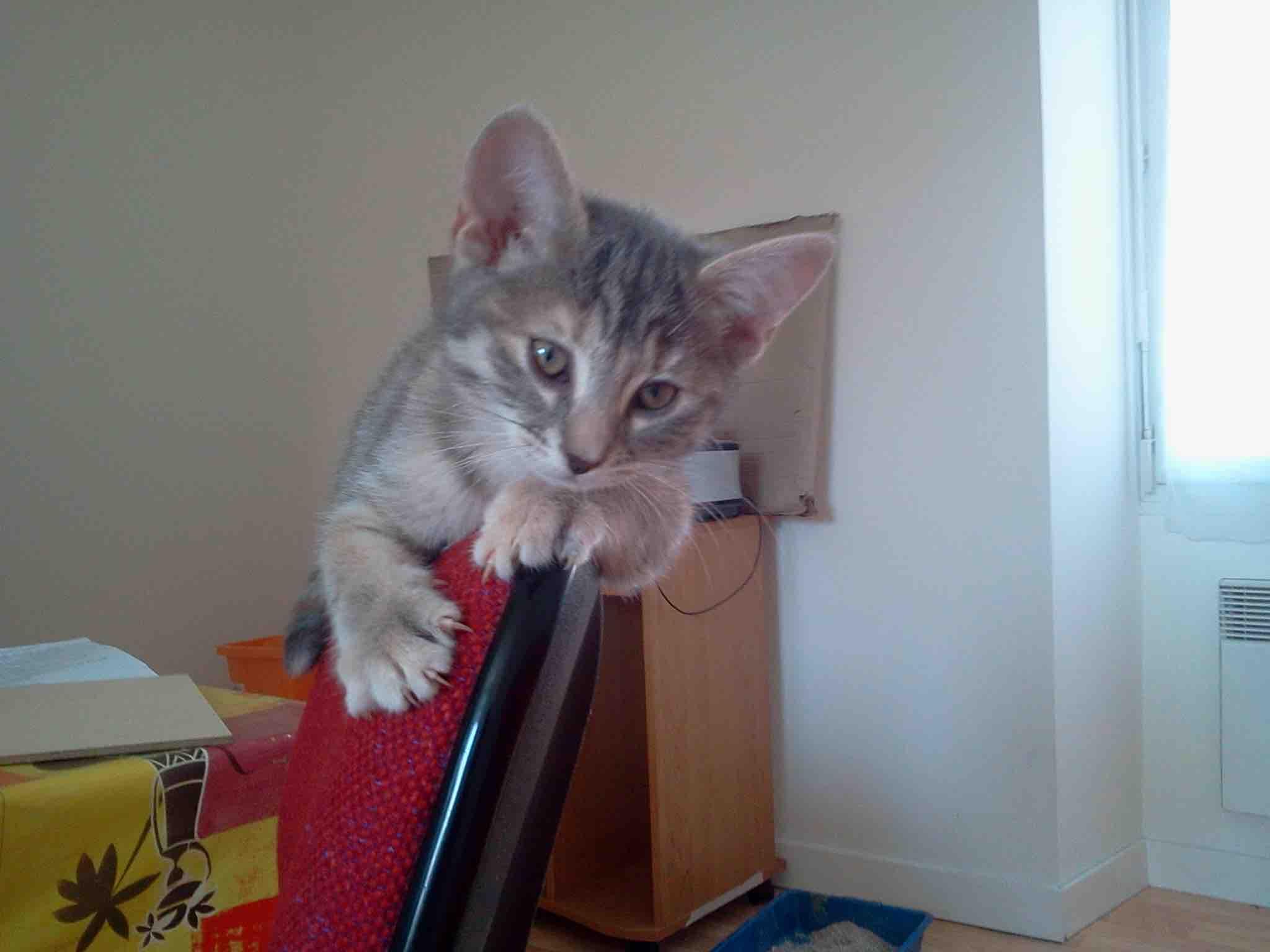 specialiste comportement du chat