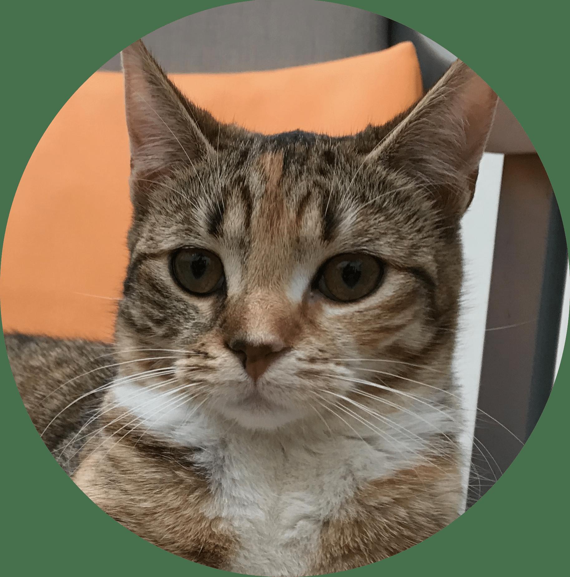 comportementaliste chat le mans