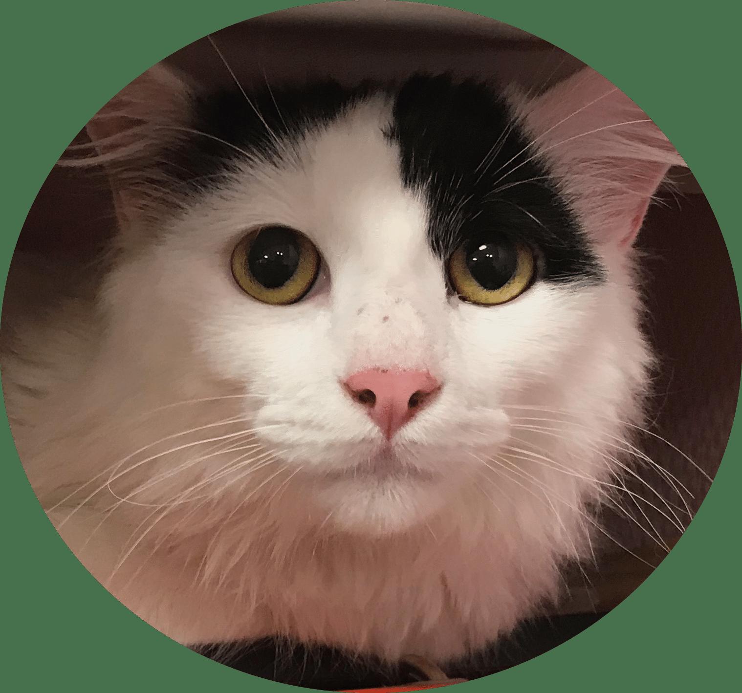 ethologue chat sarthe